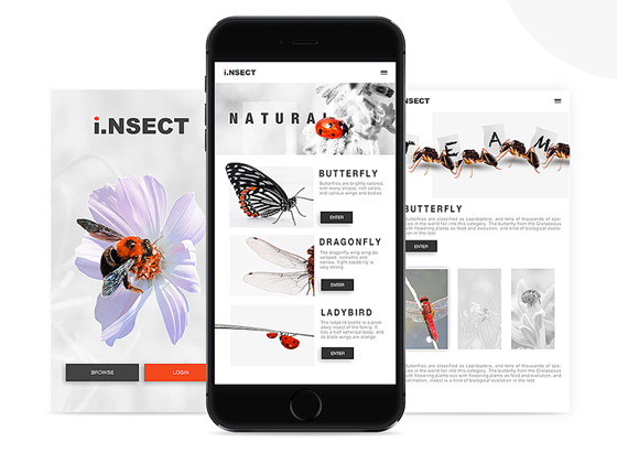 Insect App Design